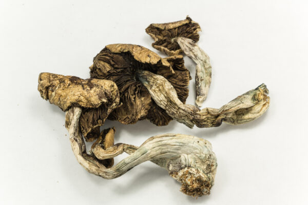 Psilocybe cubensis For Sale online